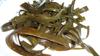 Algas espaguetti de mar