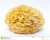 Hongo blanco u hongo de la oreja plateada