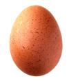 Huevo de pavo