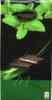 Mini tabletas de chocolate negro rellenas con crema sabor menta Choco Wishes
