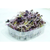 Semillas de rábano germinadas