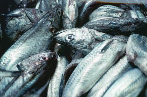 5 Razones por las que deberías eliminar el consumo de pescado de tu dieta