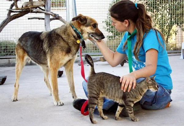 Murcia se responsabiliza con los animales