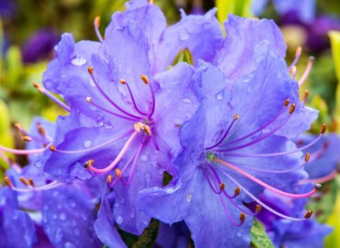 ¿Qué son las flores de bach y para qué sirven?