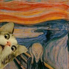 Cat Bar Cat