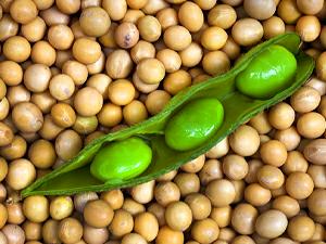 Es beneficiosa la soja o no?