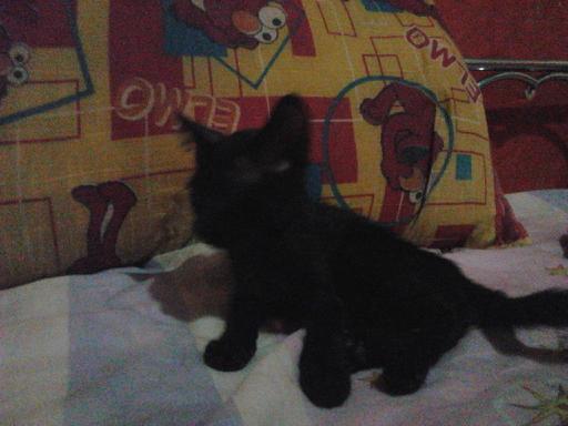 Adopción de un gatito